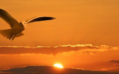Déployer les ailes de ses potentialités