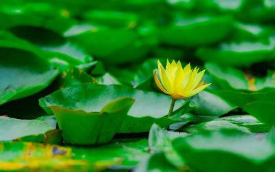 Découvrez un espace intérieur paisible et libre avec la méditation